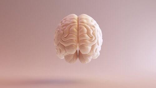 Corteccia prefrontale dorsolaterale: funzioni principali