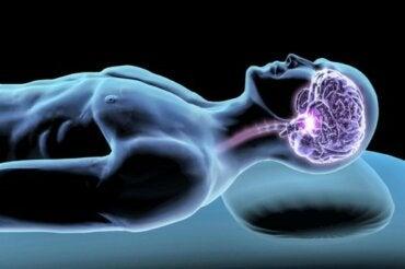 Ormoni del sonno: intermediari del riposo