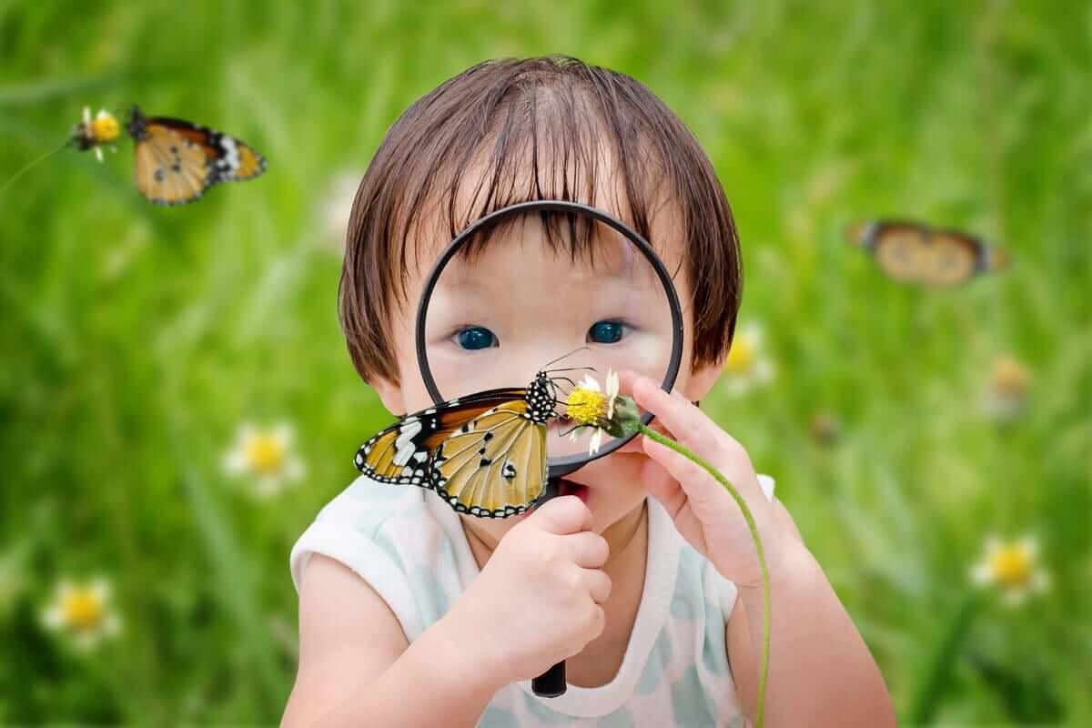 Bambino con lente di ingrandimento su una farfalla.
