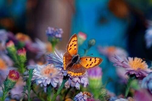 Il fiore più bello del giardino, storia giapponese