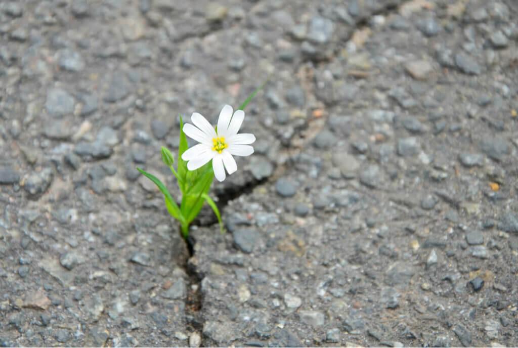 Fiore nasce dall'asfalto.