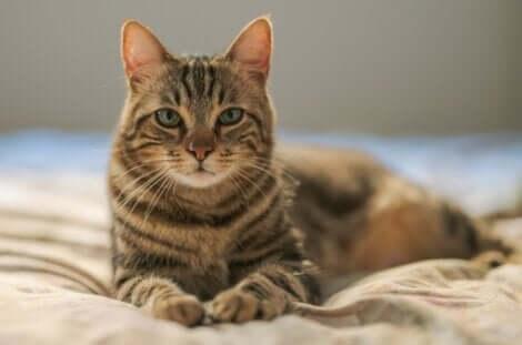 Gatto tigrato con occhi chiari.