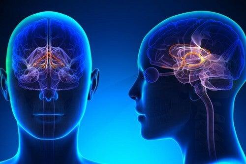 Il sistema limbico e i sapori.