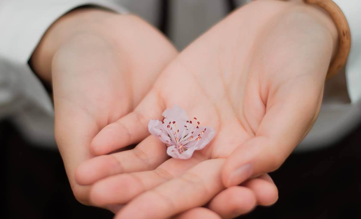Mani che tengono un fiore.