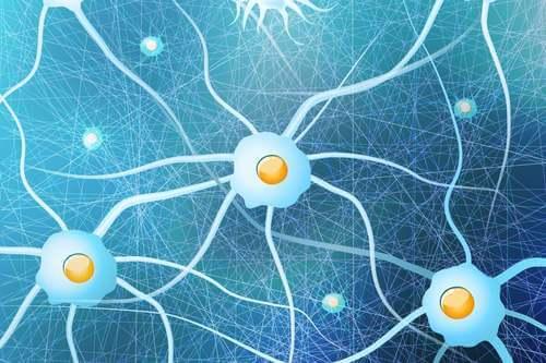 Cellule gliali con neuroni.