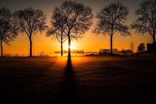 Alberi all'alba.