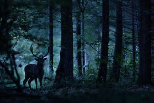 Un cervo nel bosco.