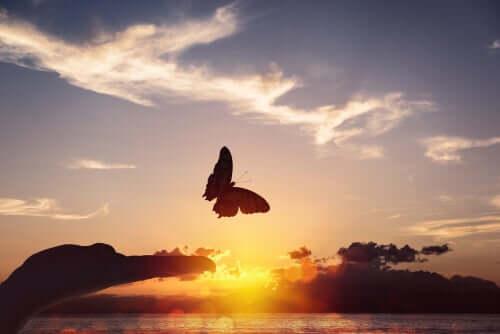 Farfalla che vola al tramonto.