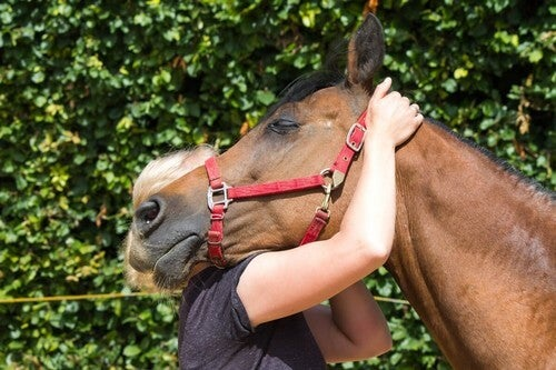 Ippoterapia cavallo e bambino.