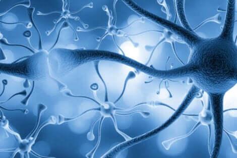 Neuroni connessi tra loro.