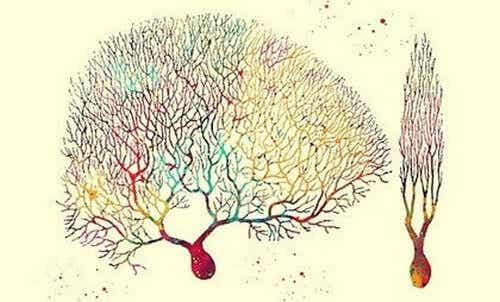 Cellule di Purkinje, enigmi di cuore e cervello