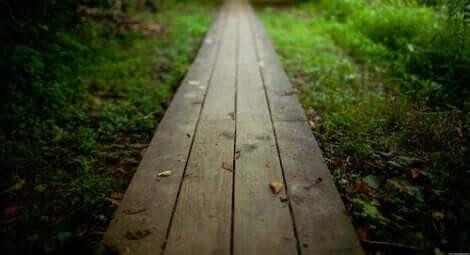 Passerella di legno in mezzo all'erba.