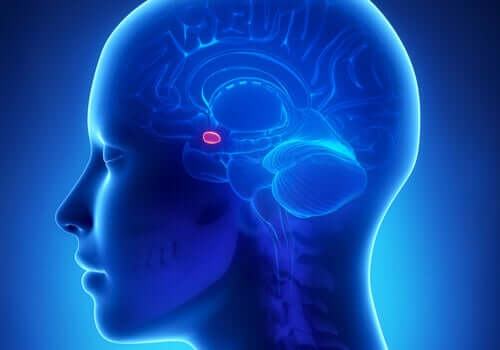 Amigdala nel cervello umano.