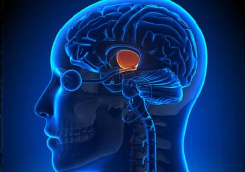 Ruolo del cervello nel controllo del peso.