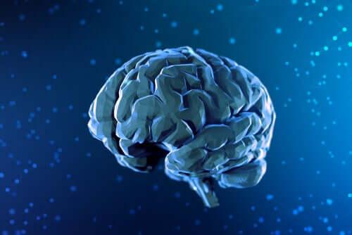 Illustrazione cervello di profilo.