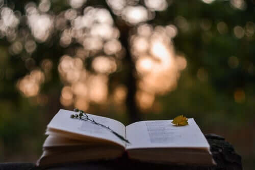 Libro aperto nella natura.