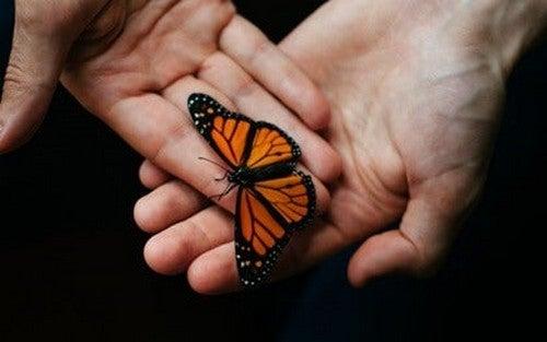 Principi di reciprocità e farfalla tra le mani.
