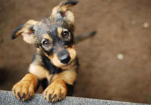 Animali domestici abbandonati: come scegliere