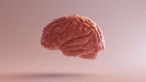 Rappresentazione del cervello umano.