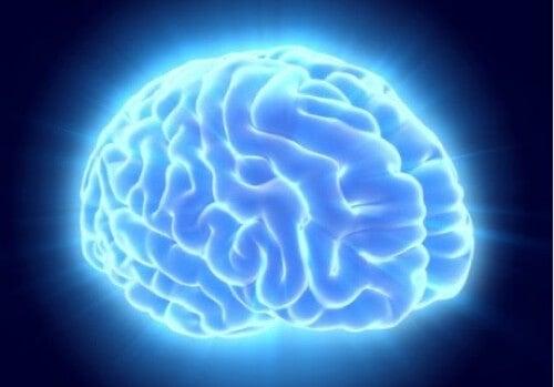 Cervello illuminato.