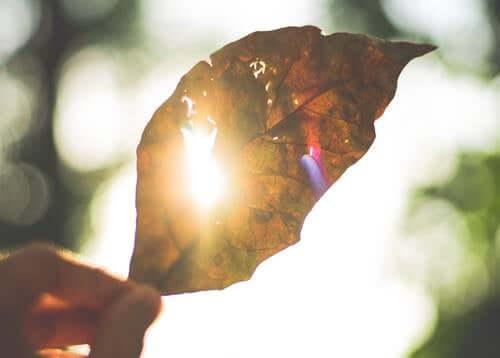 Una foglia al sole.