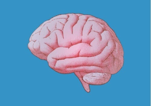 Nuclei del rafe: caratteristiche e funzioni