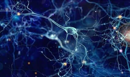 Connessioni tra neuroni.