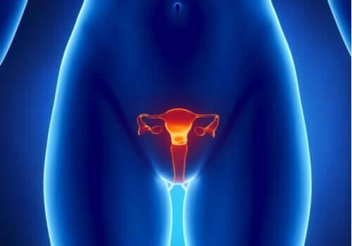 Gli estrogeni: caratteristiche e funzioni