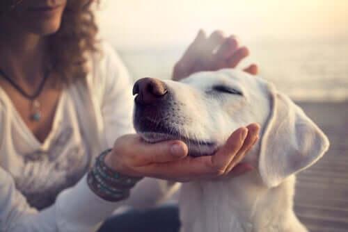 Il mio cane, il mio miglior amico