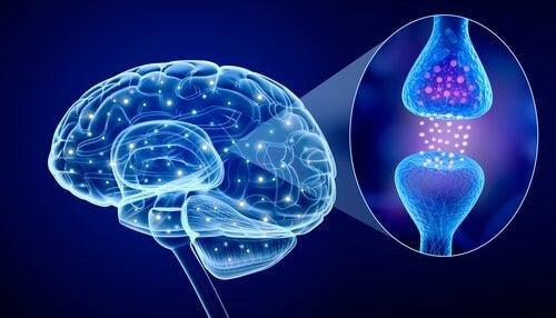 Psiconeuroimmunologia: di cosa si occupa?