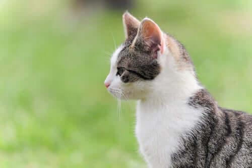 Foto di un gatto di profilo.