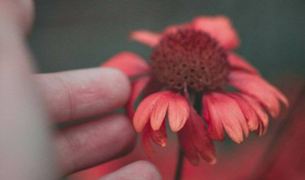 Mano che tocca un fiore.