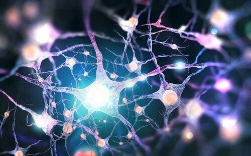 Dinorfine: neurotrasmettitori oppioidi endogeni