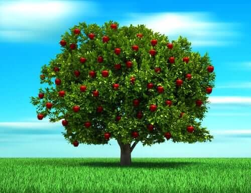 La parabola dell'albero, storia sull'amore di un padre
