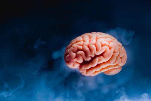 Cervello su sfondo blu.