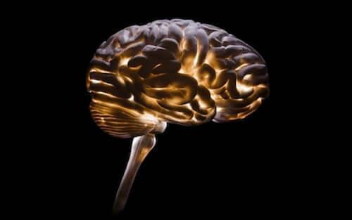 Neurocriminologia: una disciplina necessaria