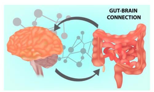 Microbiota intestinale e salute cerebrale