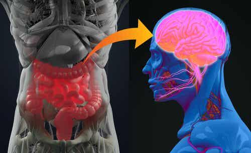 Interconnessione cervello e intestino.