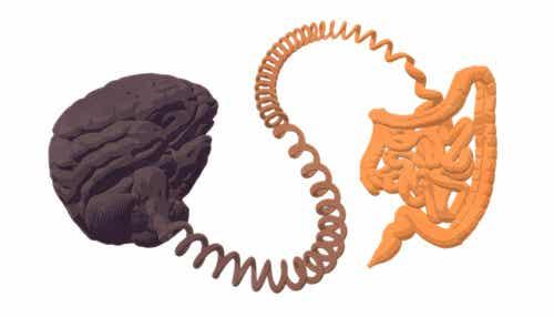 Il microbiota intestinale e il cervello.