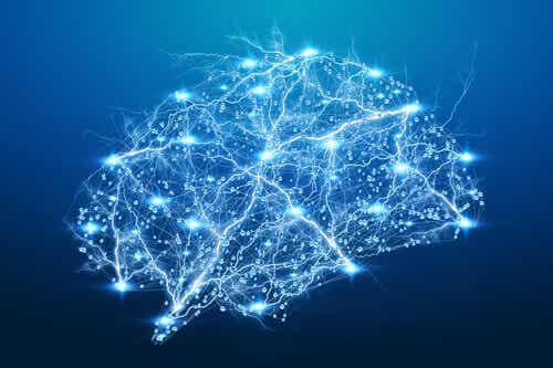 Rete neuronale nel cervello.