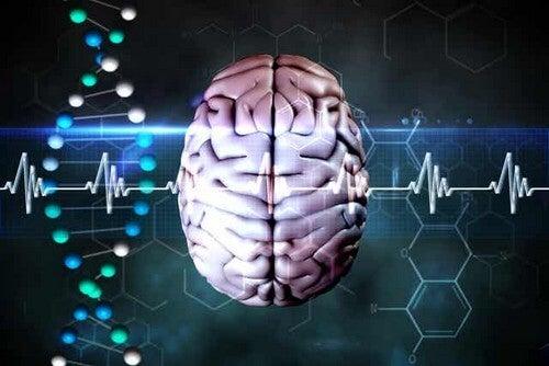 Onde cerebrali alfa.