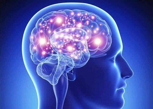 Terminazioni nervose del cervello.