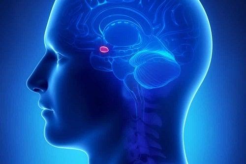 Disturbo neurologico e atarassia.