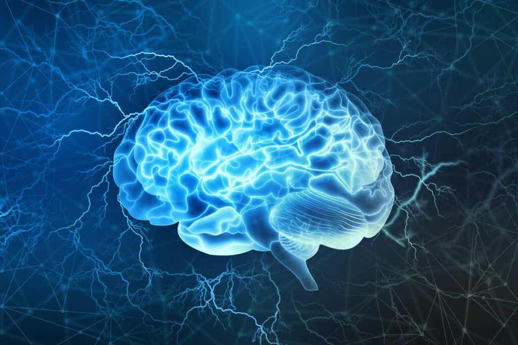 Aree del cervello della fame e della curiosità.