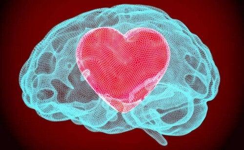 La gentilezza cognitiva e il cervello.