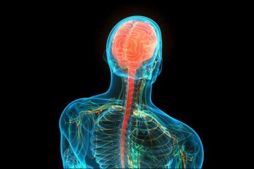 Sistema nervoso centrale.