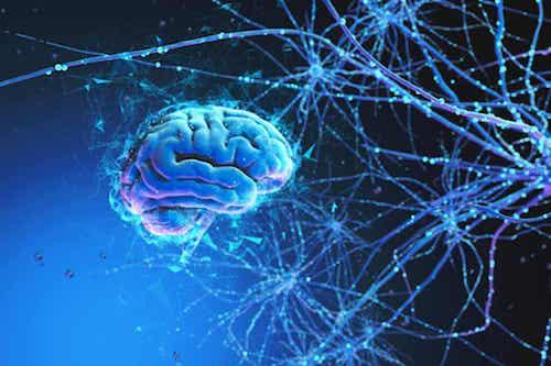 Cervello e reti neurali.