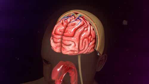 Cervello.