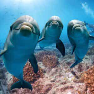 L'intelligenza dei delfini secondo la scienza