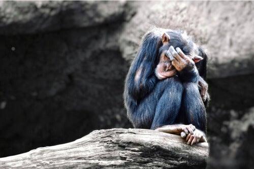 Gli animali possono soffrire di depressione?
